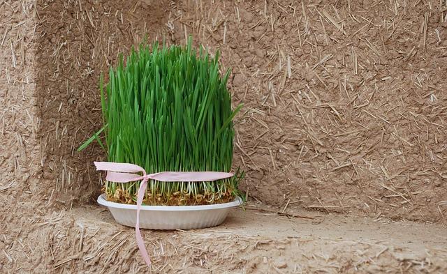 grass-532563_640
